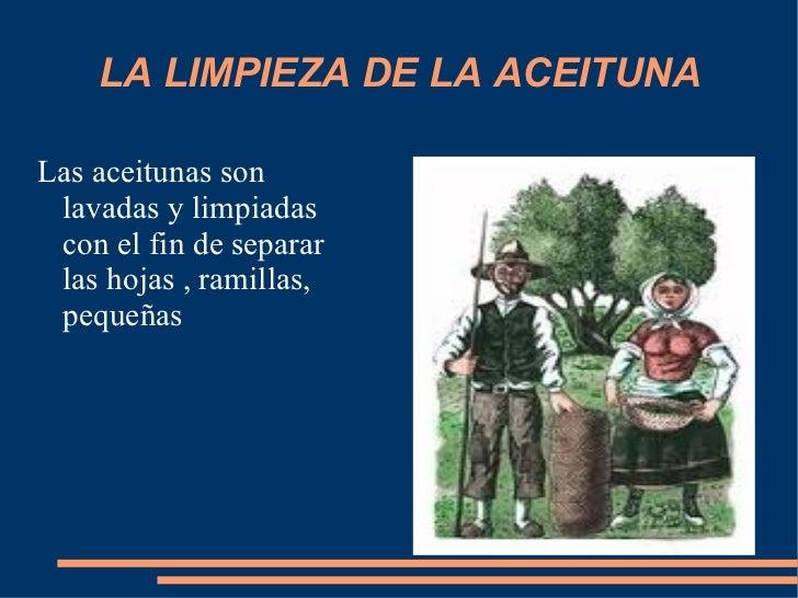 LA LIMPIEZA DE LA ACEITUNA <ul><li>Las aceitunas son lavadas y limpiadas con el fin de separar las hojas , ramillas, peque...