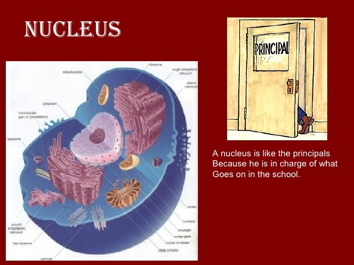 a cell is like a school[1], Human Body