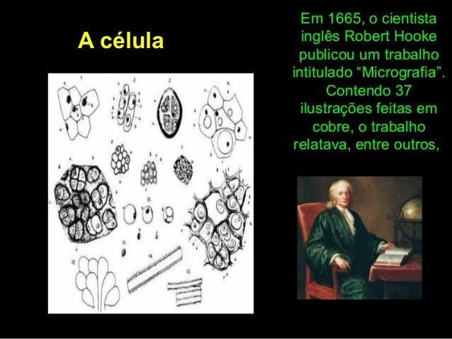 """Em 1665, o cientista inglês Robert Hooke publicou um trabalho intitulado """"Micrografia"""". Contendo 37 ilustrações feitas em ..."""