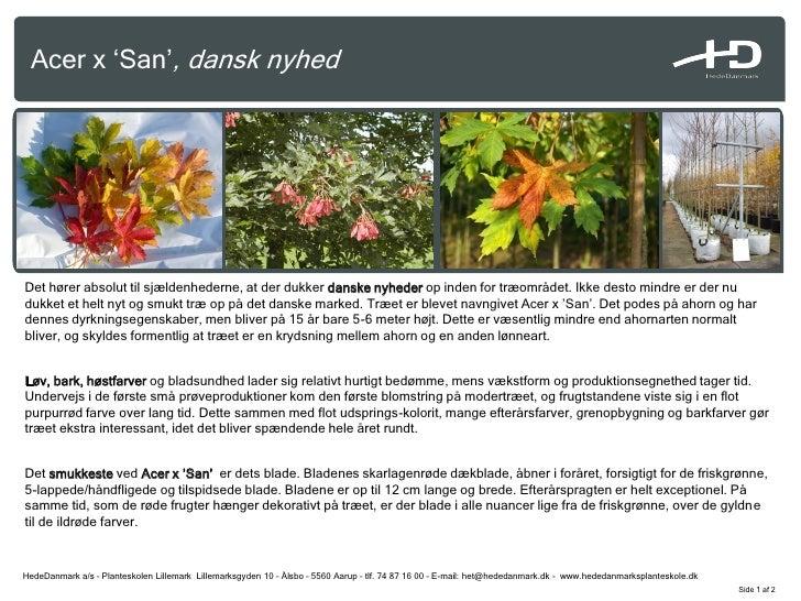 Acer x 'San', dansk nyhed     Det hører absolut til sjældenhederne, at der dukker danske nyheder op inden for træområdet. ...