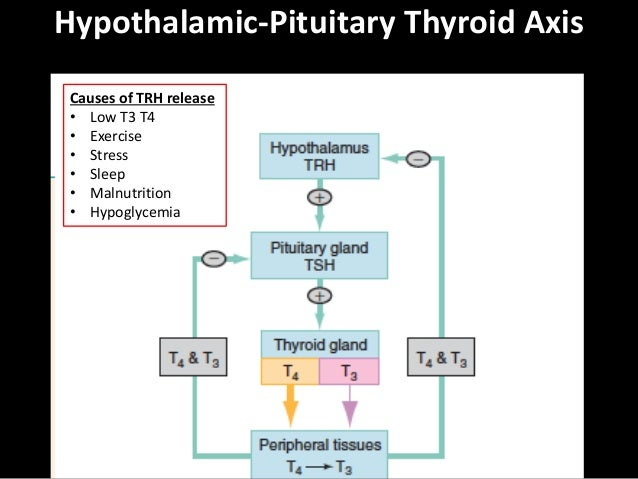 ACES: Constipation / Thyroid-Adrenal / Elderly