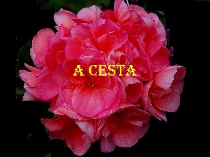 A CESTA