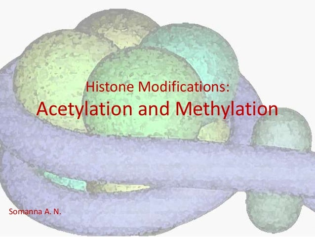 Histone Modifications: Acetylation and Methylation Somanna A. N.