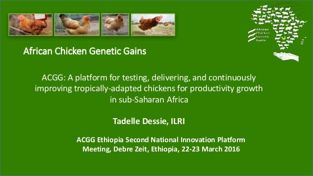 African Chicken Genetic Gains ACGG: A platform for testing, delivering, and continuously improving tropically-adapted chic...