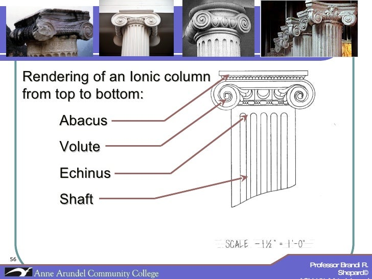 Rendering of an Ionic column from top to bottom: Abacus Volute Echinus Shaft