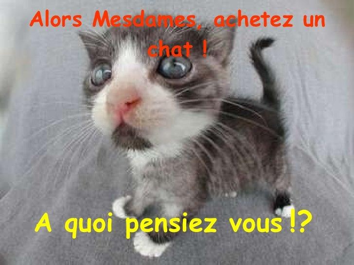 Alors Mesdames, achetez un chat ! <ul><li>A quoi pensiez vous   !?   </li></ul>