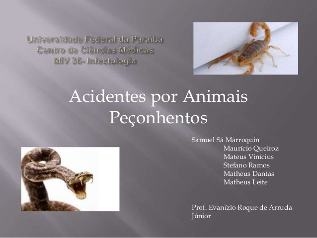 Acidentes por Animais Peçonhentos Samuel Sá Marroquin Maurício Queiroz Mateus Vinícius Stefano Ramos Matheus Dantas Matheu...
