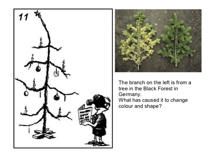 The branch on the left is from a tree in the Black Forest in Germany. What has caused it to change colour and shape?