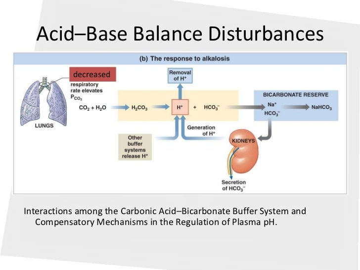 pathophysiology of acid base balance Study flashcards on pathophysiology (acid base balance) at cramcom quickly memorize the terms, phrases and much more cramcom makes.