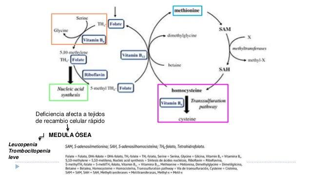 Aspectos Básicos Del Metabolismo Lipídico  Medwave