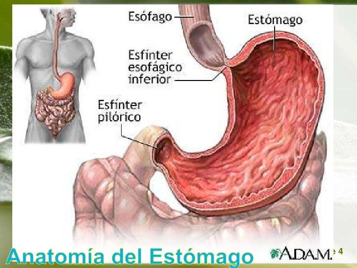 Acidopeptico y ulcera peptica