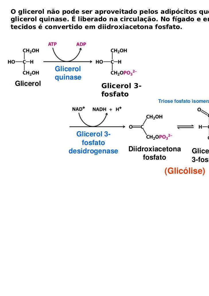 O glicerol não pode ser aproveitado pelos adipócitos que não temglicerol quinase. É liberado na circulação. No fígado e em...