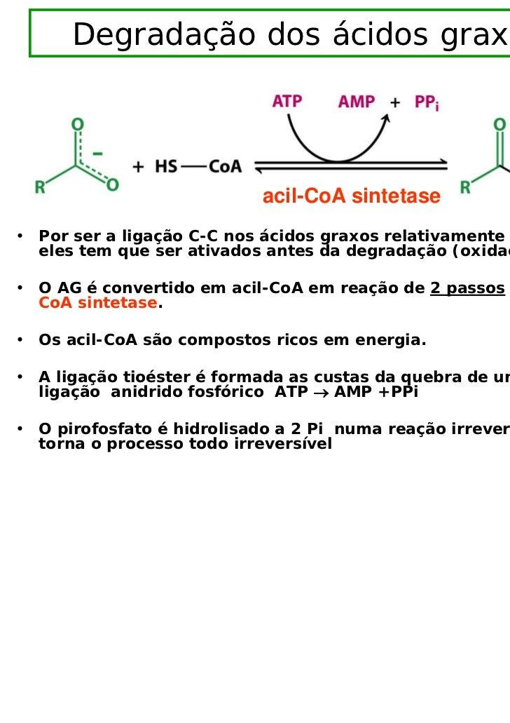 Degradação dos ácidos graxos                            acil-CoA sintetase• Por ser a ligação C-C nos ácidos graxos relati...