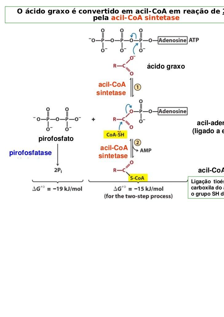O ácido graxo é convertido em acil-CoA em reação de 2 passos                     pela acil-CoA sintetase                  ...
