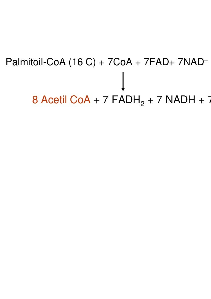 Palmitoil-CoA (16 C) + 7CoA + 7FAD+ 7NAD+ + 7 H2O     8 Acetil CoA + 7 FADH2 + 7 NADH + 7H+