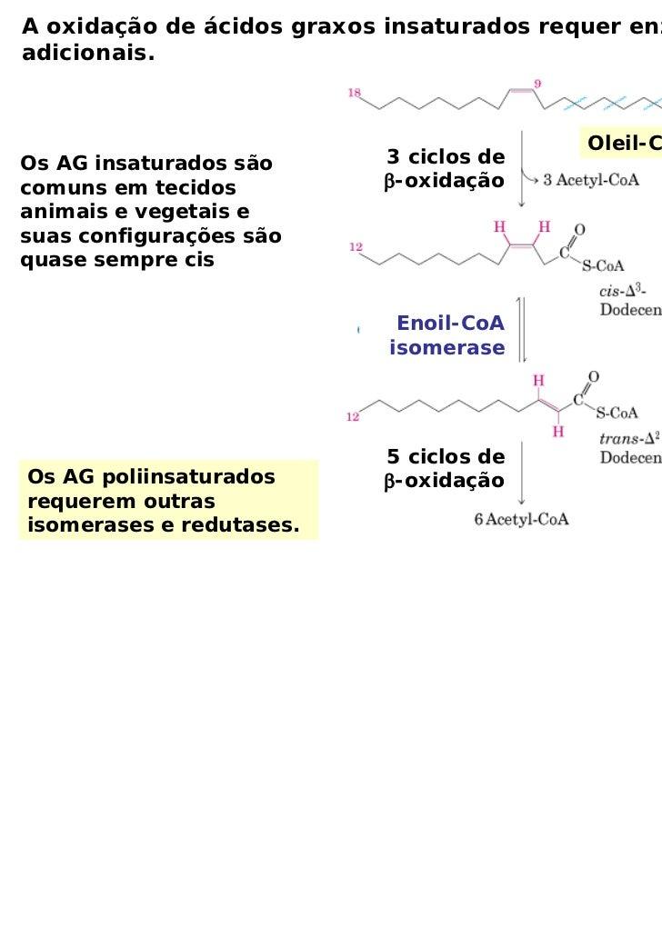 A oxidação de ácidos graxos insaturados requer enzimasadicionais.                                           Oleil-CoAOs AG...