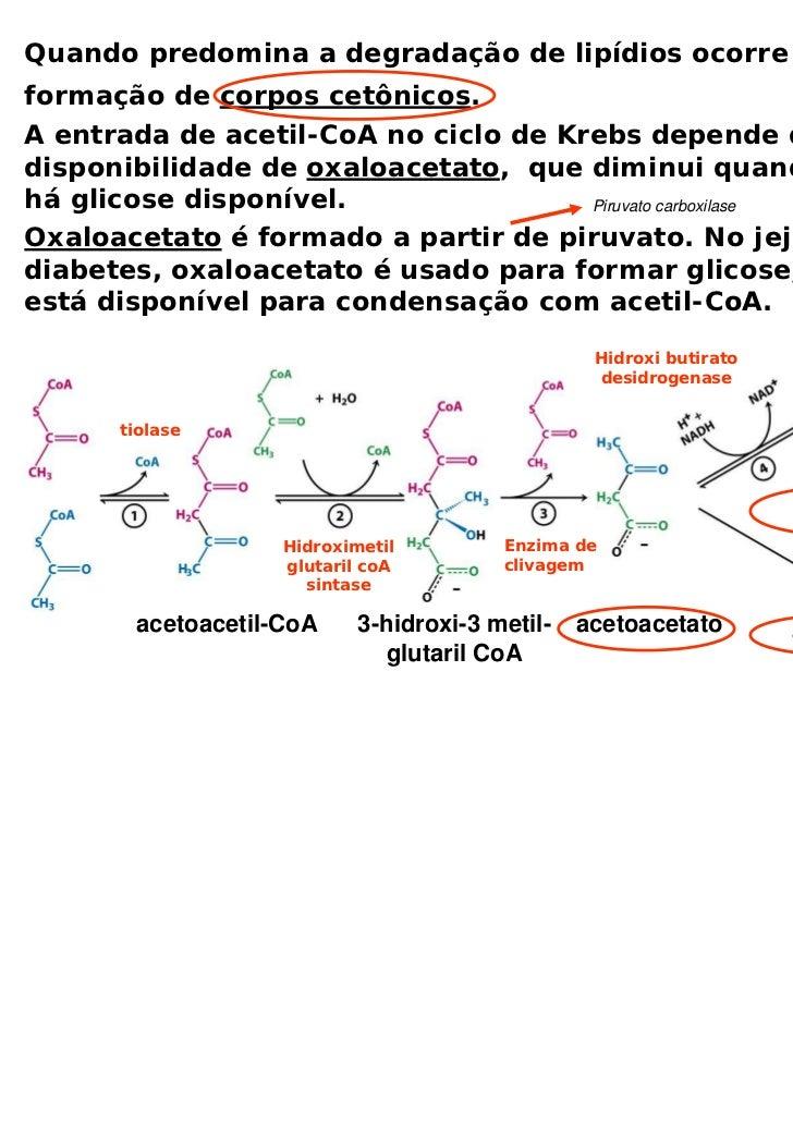 Quando predomina a degradação de lipídios ocorre aformação de corpos cetônicos.A entrada de acetil-CoA no ciclo de Krebs d...
