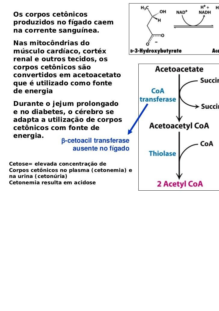 Os corpos cetônicos produzidos no fígado caem na corrente sanguínea. Nas mitocôndrias do músculo cardíaco, cortéx renal e ...