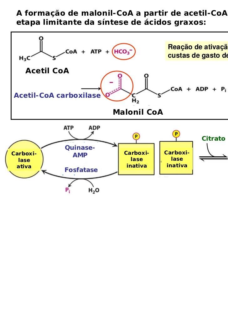 A formação de malonil-CoA a partir de acetil-CoA é a etapa limitante da síntese de ácidos graxos:                         ...