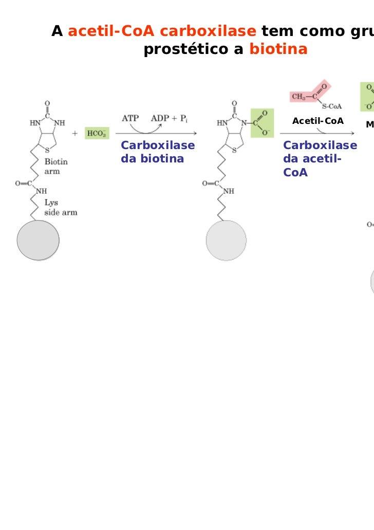 A acetil-CoA carboxilase tem como grupo           prostético a biotina                          Acetil-CoA   Malonil-CoA  ...