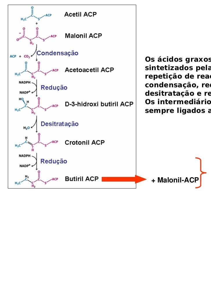Os ácidos graxos sãosintetizados pelarepetição de reações decondensação, redução,desitratação e redução.Os intermediários ...