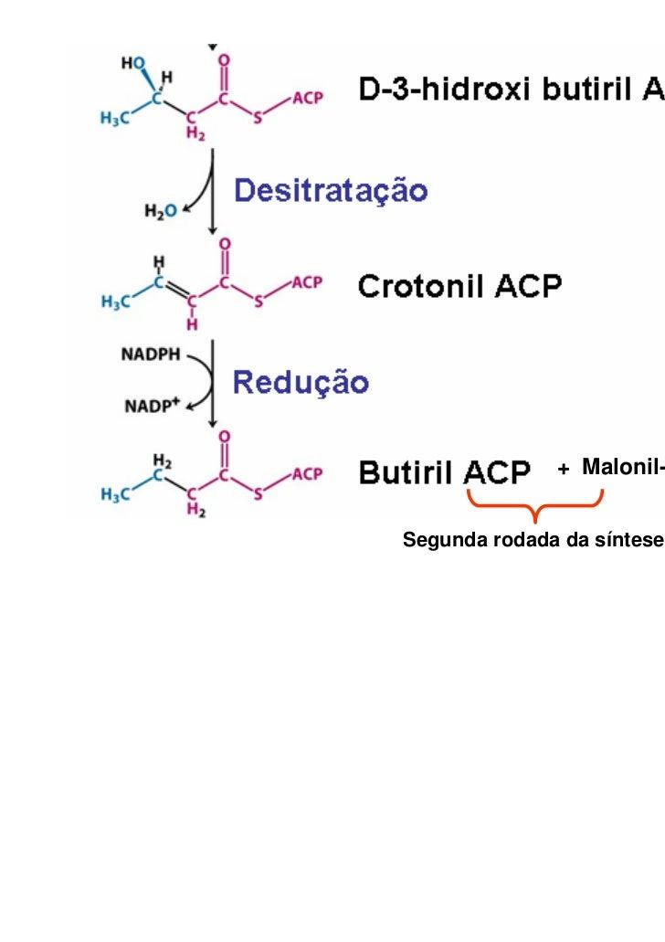 + Malonil-ACPSegunda rodada da síntese