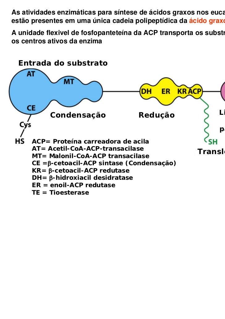 As atividades enzimáticas para síntese de ácidos graxos nos eucariotosestão presentes em uma única cadeia polipeptídica da...