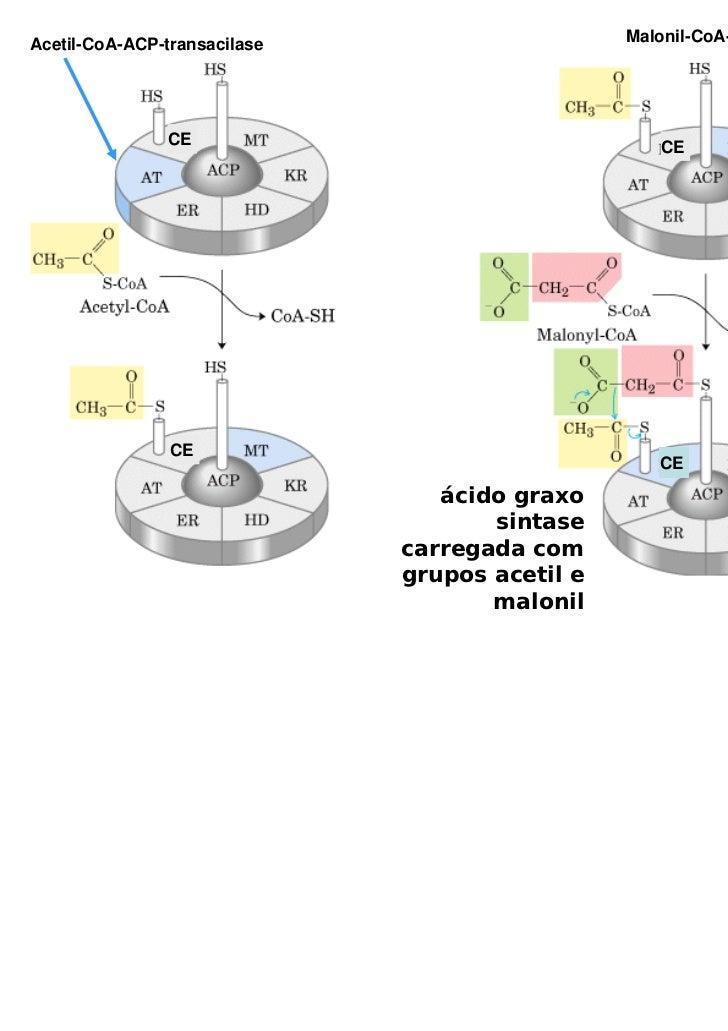 Acetil-CoA-ACP-transacilase                     Malonil-CoA-ACP transacilase               CE                             ...