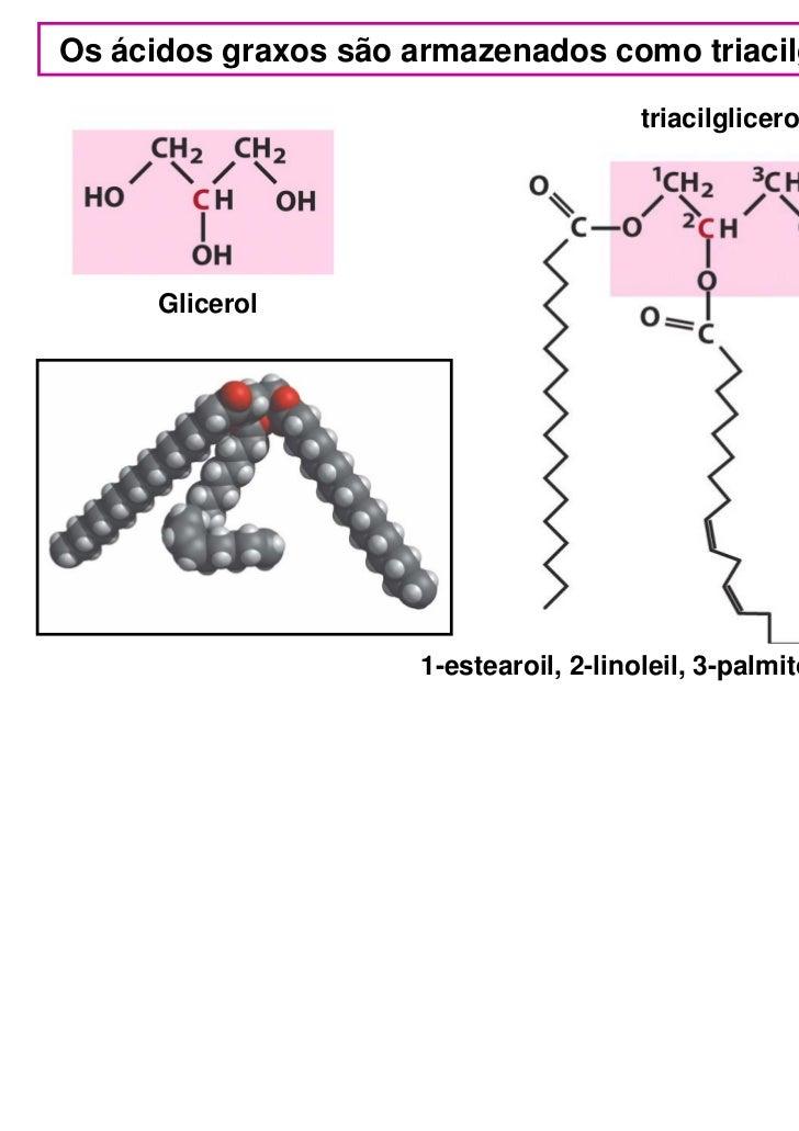 Os ácidos graxos são armazenados como triacilgliceróis                                         triacilglicerol      Glicer...