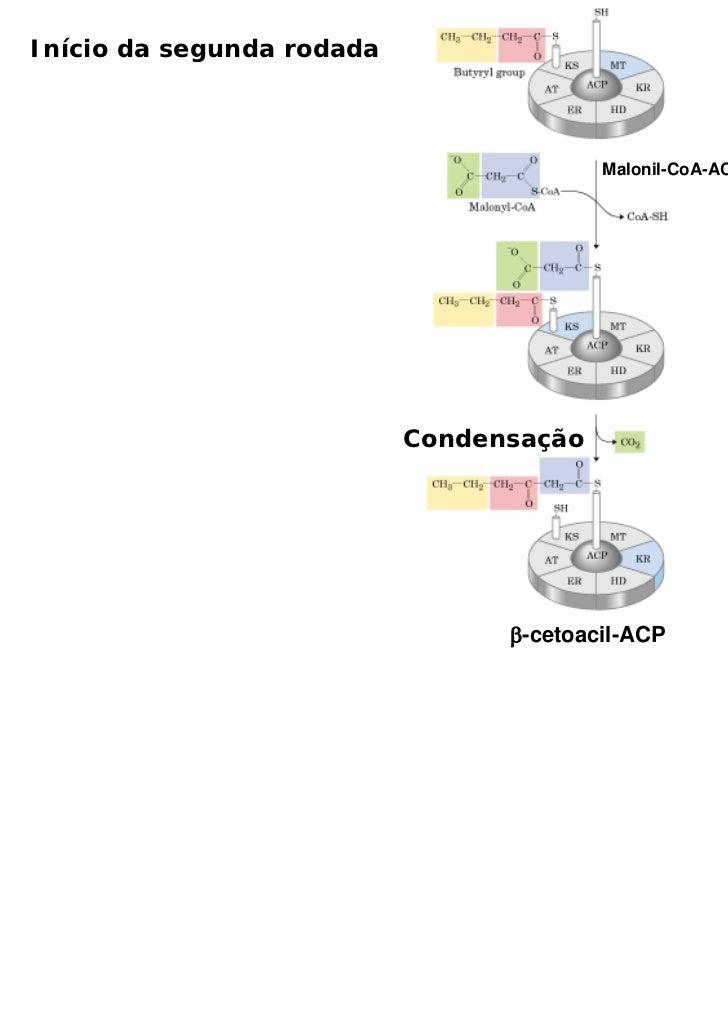 Início da segunda rodada                                         Malonil-CoA-ACP transacilase                           Co...