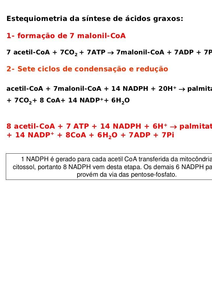 Estequiometria da síntese de ácidos graxos:1- formação de 7 malonil-CoA7 acetil-CoA + 7CO2 + 7ATP → 7malonil-CoA + 7ADP + ...