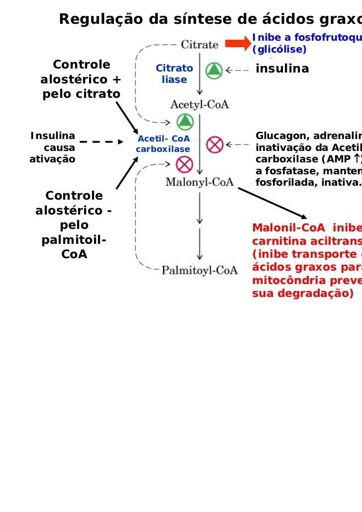 Regulação da síntese de ácidos graxos                              Inibe a fosfofrutoquinase                              ...