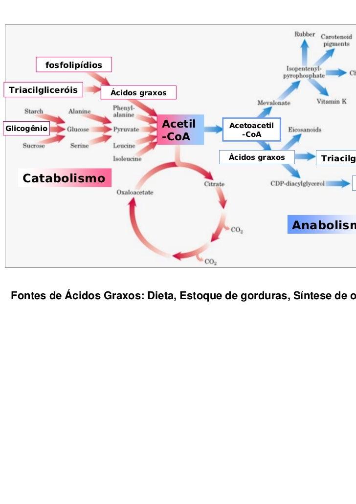 fosfolipídiosTriacilgliceróis         Ácidos graxosGlicogênio                                    Acetil   Acetoacetil     ...