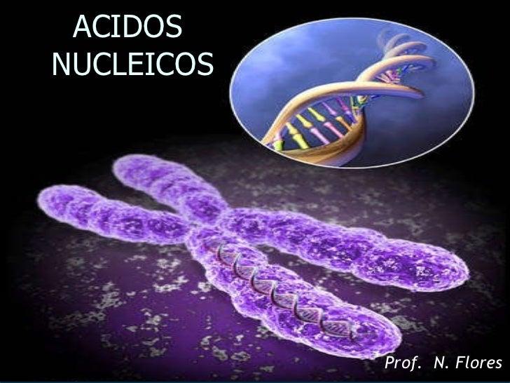 ACIDOS  NUCLEICOS Prof.  N. Flores