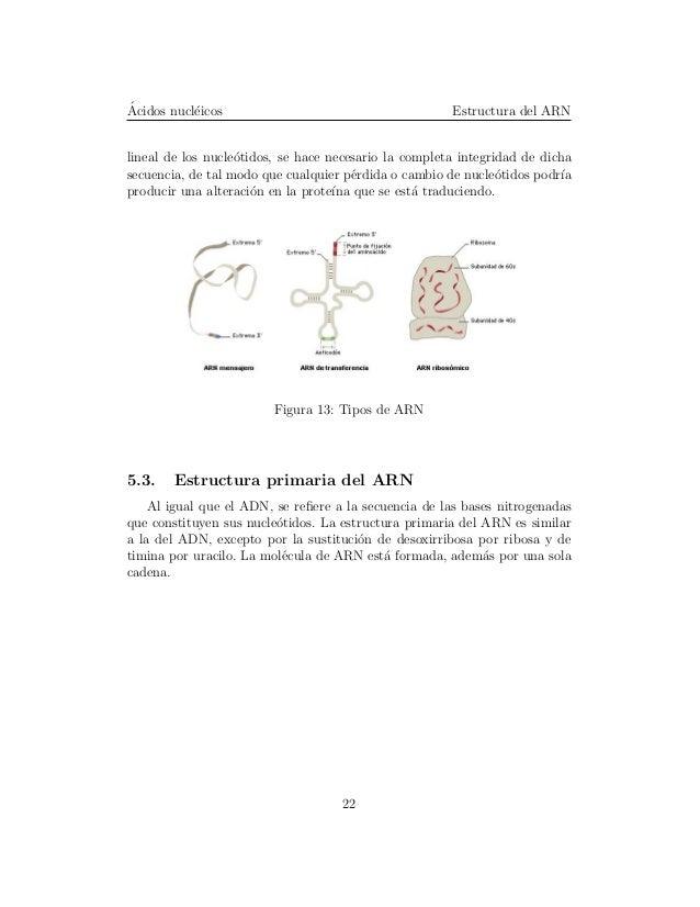 Acidos Nucleicos 09