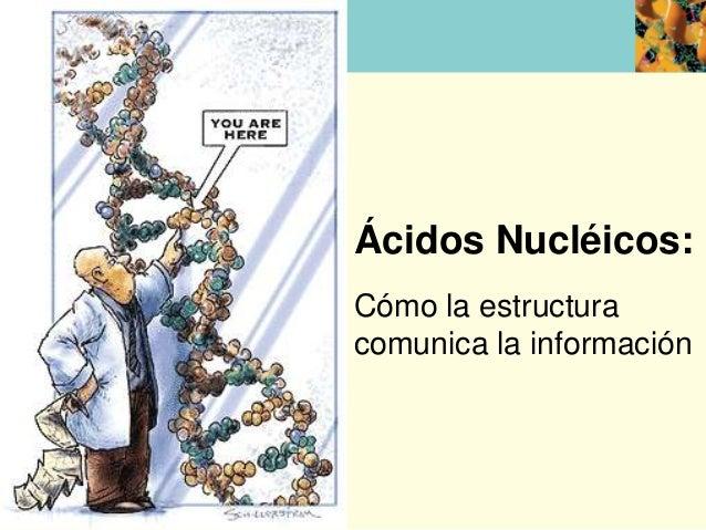 Ácidos Nucléicos:Cómo la estructuracomunica la información