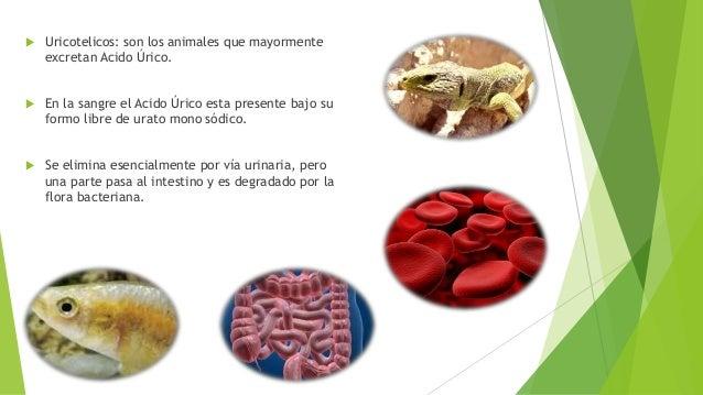 el sudor elimina el acido urico que frutas y verduras contienen acido urico gota dedo gordo pie