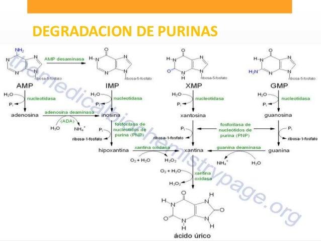 valor normal del acido urico en embarazadas zarzaparrilla acido urico acido urico alto sintomas gota