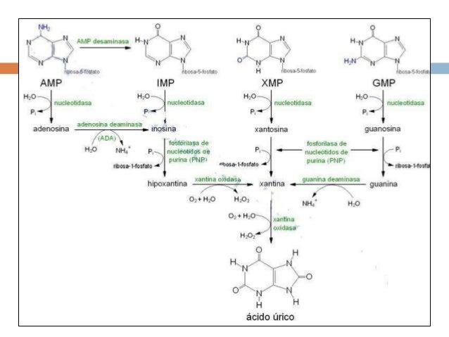 menu para el acido urico alto jugos para regular el acido urico como bajar el acido urico rapido naturalmente