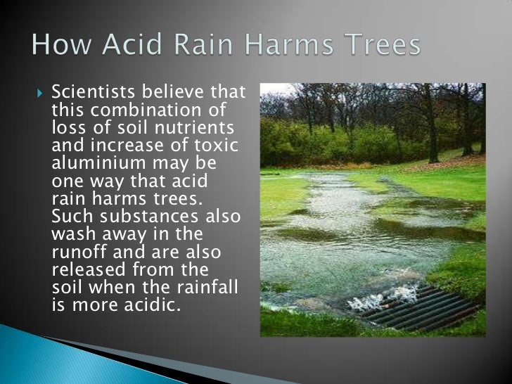 understanding what acid rain is and its effects Effects of acid rain overall, the environment and its inhabitants are adapted to survive within a certain acidity level when acid rain falls, it can dramatically alter the acidity level of the habitat and cause a great deal of damage to the living and non-living things within.