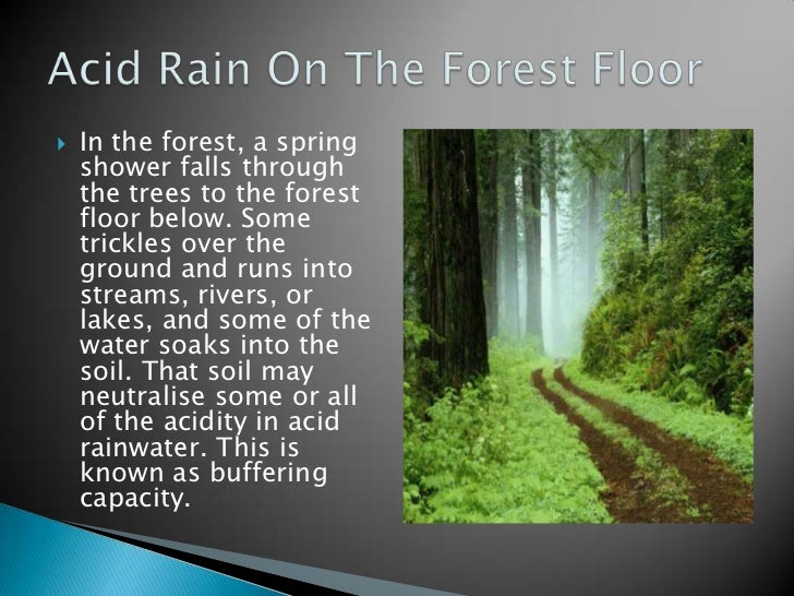 acid rain and its effects on forestry