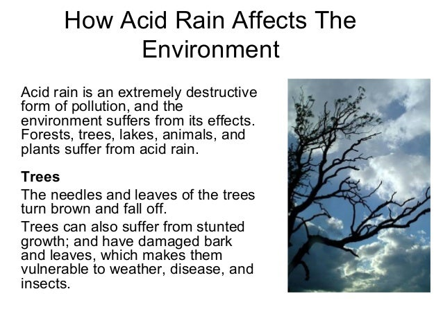 a description of acid rain and its disastrous effects The writer magazine travel essay contest term paper about acid rain rutgers admissions essay 2012 how rain acid rain is a serious problem with disastrous effects.