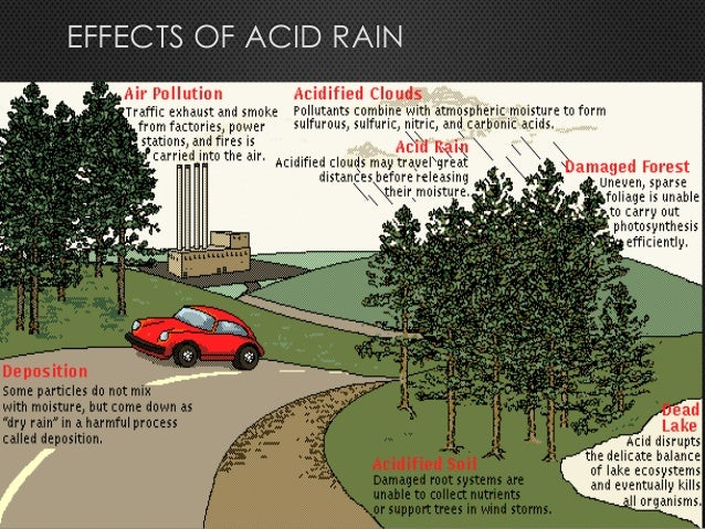 a look at the environmental effects of acid rain Long-term data from the hubbard brook experimental forest, new hampshire, suggest that although changes in stream ph have been relatively small, large quantities of calcium and magnesium have been lost from the soil complex and exported by drainage water because of inputs of acid rain and declines in atmospheric deposition of base cations.