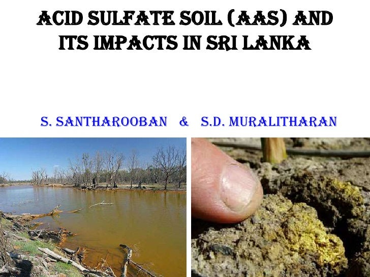 Acid Sulfate Soil (AAS) and  its impacts in Sri LankaS. Santharooban & s.d. Muralitharan