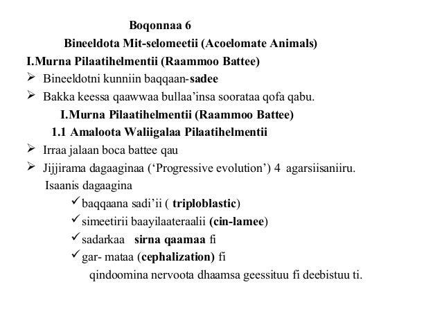 Boqonnaa 6 Bineeldota Mit-selomeetii (Acoelomate Animals) I.Murna Pilaatihelmentii (Raammoo Battee)  Bineeldotni kunniin ...