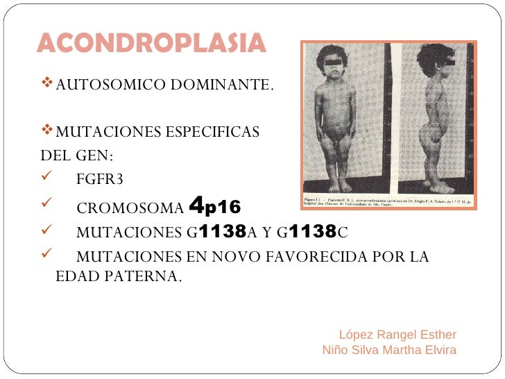ACONDROPLASIA <ul><li>AUTOSOMICO DOMINANTE. </li></ul><ul><li>MUTACIONES ESPECIFICAS  </li></ul><ul><li>DEL GEN: </li></ul...