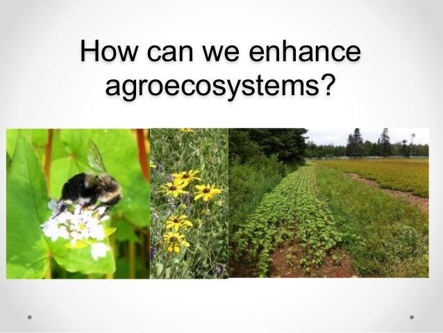 Habitat Mangement for Native Pollinators Slide 2