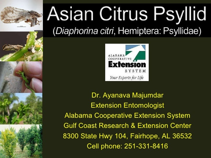 Dr. Ayanava Majumdar Extension Entomologist Alabama Cooperative Extension System Gulf Coast Research & Extension Center 83...