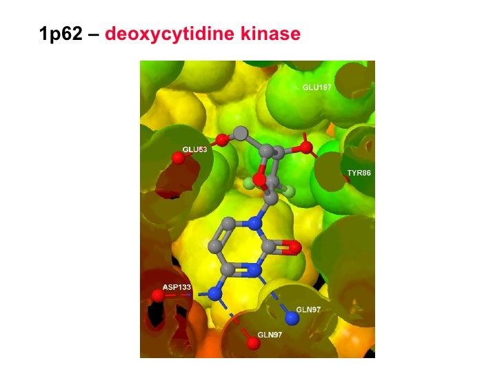 1p62 –  deoxycytidine kinase