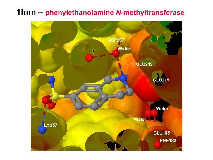 1hnn –  phenylethanolamine  N -methyltransferase